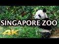 Singapore Zoo Animals Tour 4K