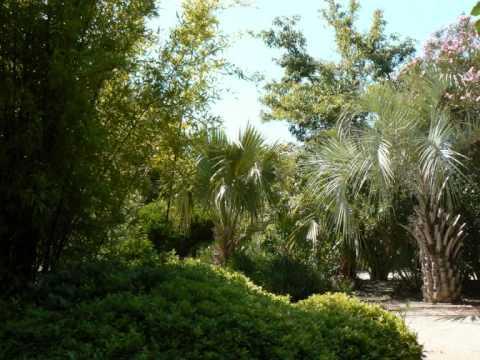 Le jardin exotique de ponteilla youtube - Photo de jardin exotique ...