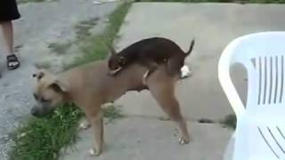 Funny animal sexy video 2015