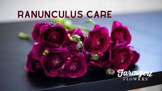 Ranunculus Care - Farmgirl Flowers
