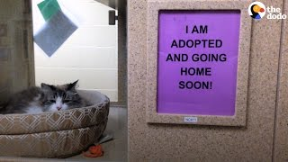 Woman Pays For Hundreds Of Pet Adoptions