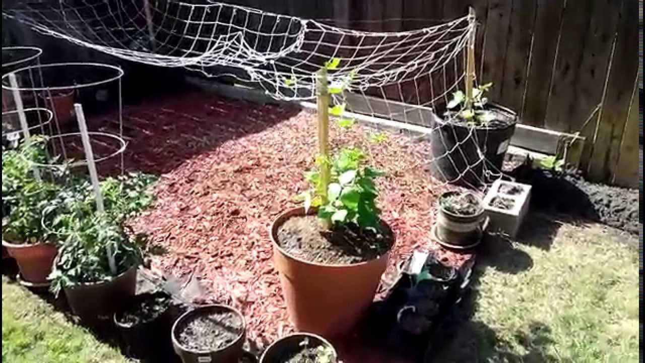 indian vegetable gardening - youtube