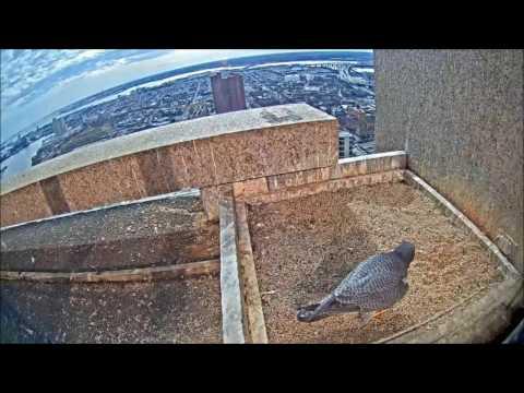 01/12/17  Perecrene Falcon visited Transamerica biulding/ Baltimore