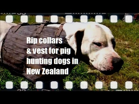 Rip collars & vests for hunting dogs in NZ