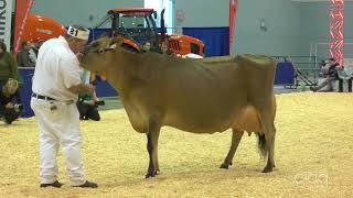 Suprême Laitier 2017 - Vache adulte - Jersey