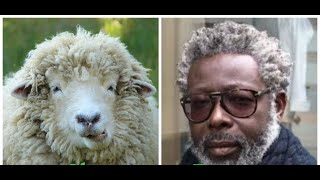 """Black People Are God's Woolly-Haired Lost Sheep Mentioned Throughout The Bible?"""