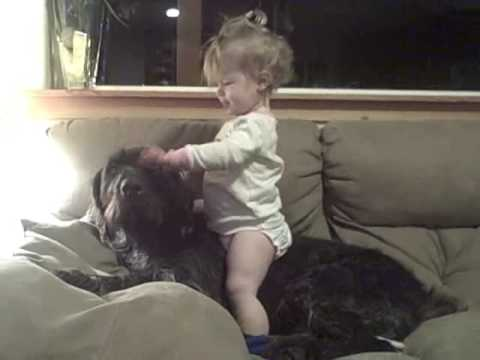One Kid Proofed German Wirehaired Pointer Youtube
