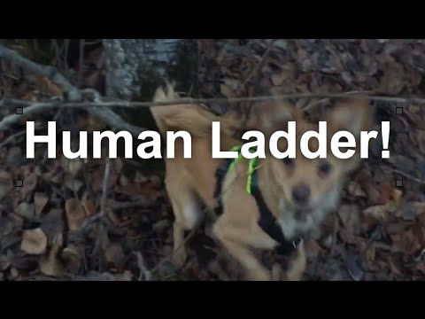 Super Smart Dog Problem Solving: Human Ladder | Grisha Stewart