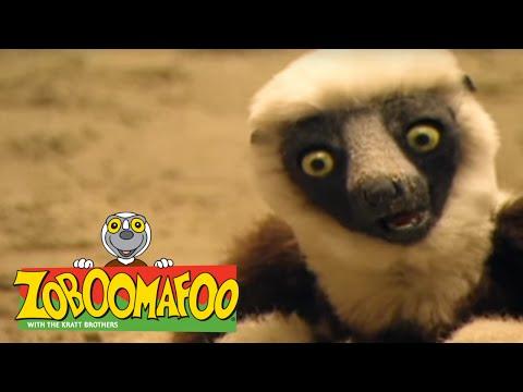 Zoboomafoo 133 - Sand Creatures (Full Episode) - YouTube