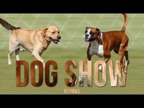 Bermuda Kennel Club Dog Show, October 2016