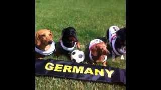 Team Dachshund (germany) Vine Video - Fifa World Cup 2014