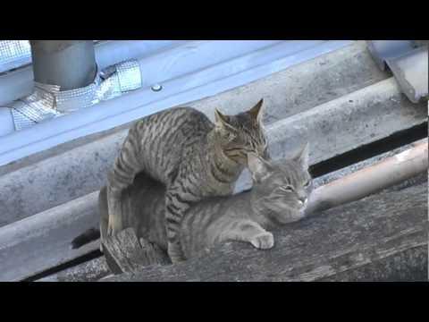 katte parring video