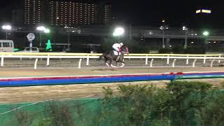 2018.11.8 船橋🐎10R アマノガワ&笠野雄大騎手 返し馬