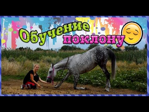 World of collection horses ВКонтакте