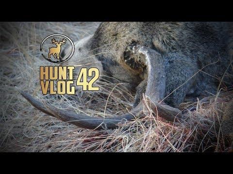 Washington State Rifle Mule Deer Hunt ‒ OPENING Weekend | Hunt Vlog #42