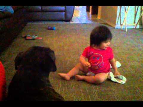 baby and pitbull dog kissing match