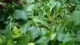 maman Sofia et les salades crétoises -3
