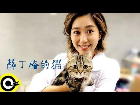 小男孩樂團 Men Envy Children【薛丁格的貓 Schrödinger's Cat】Official Music Video