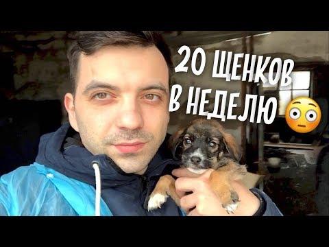 Вопрос: Почему в России практически нереально пристроить в приют щенков дворняги?
