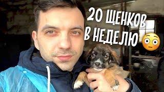 Подкидывают 20 щенков в неделю! Приют в Алматы. Приехал в Казахстан.