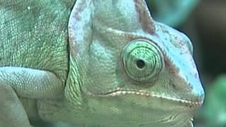 Жестокий бизнес: как зарабатывают на экзотических животных
