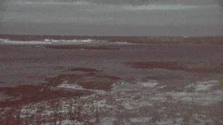 Bird Island Live Stream