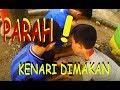 Panen Kenari Di Bandung Cara Makan Kenari Walnut  Mp3 - Mp4 Download