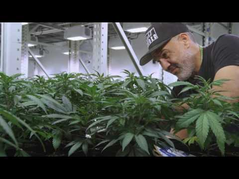 State of The Art Cultivation: A Stroll Through The Grove