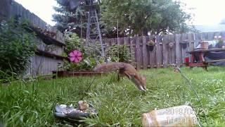 Wildlife camera: squirrels, pigeons and jays 6/20/19