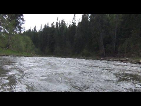Охота на лося на реву (Видео) - Манок на лося