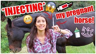 INJECTING My Pregnant Horse! | My Pregnant Horse Pt.5