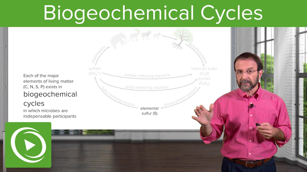 Harnessing Bacteria: Biogeochemical Cycles – Microbiology | Lecturio