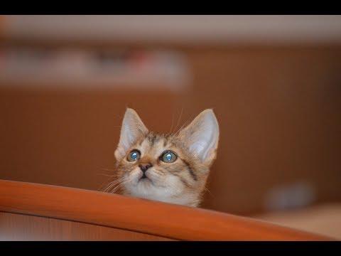 Www chlpaté mačička videá com