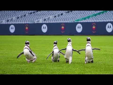 Penguins-in-the-End-Zone-The-Penguins-Visit-Soldier-Field