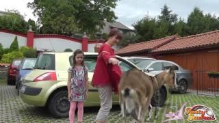 4724 Cvičené kozy