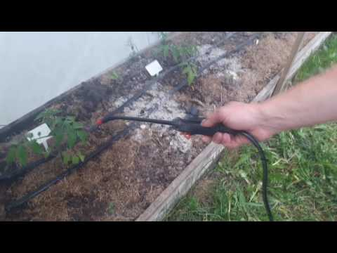 Тепловая обработка помидора процент с 1 кг отходы