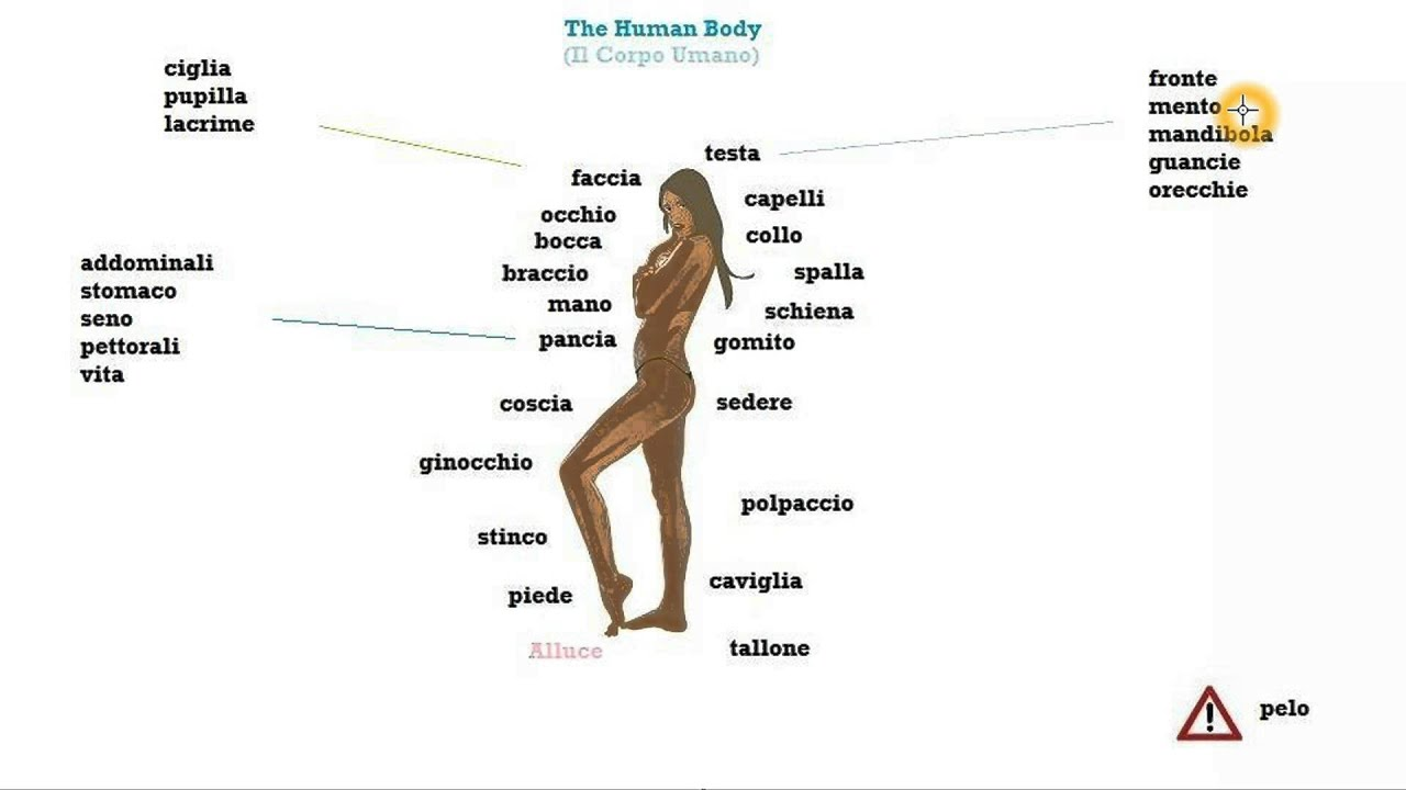 Italian Course Beginner Series Lesson 39: The Human Body