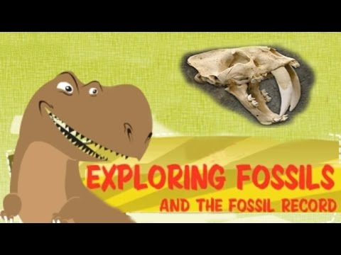 Exploring Fossil Records, How Fossils Are Formed, Interesting & Educational Videos for Kids