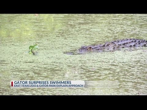 TOO CLOSE FOR COMFORT: East Texas Family Shares Experience With Alligator At Lake Hawkins