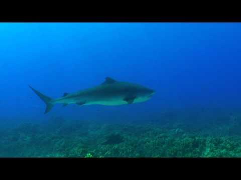 Favorite Dive Sites