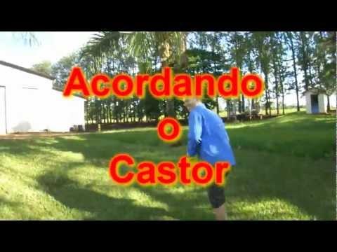 ACORDANDO O CASTOR NA FAZENDA