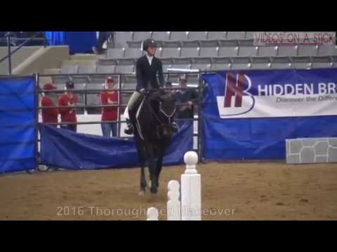 2016 Thoroughbred Makeover Show Jumper Winner Isabela de Sousa and Carajillo
