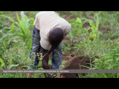 Agroforestry in the Lukaya River Basin, DR Congo
