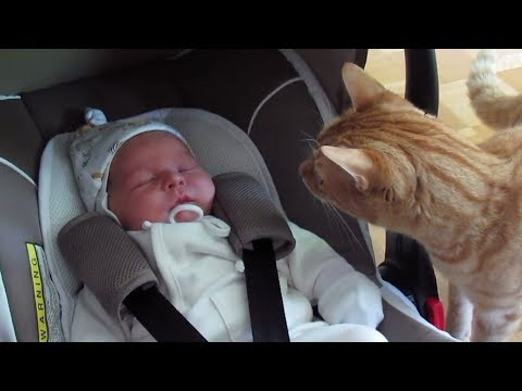 Cats Meeting Babies For The First Time Compilation 2017