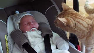 Cats Meeting Babies for the FIRST Time [NEW] Compilation