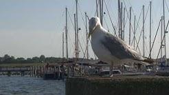 BSW-Ferienwohnungen Hiddensee - Ostsee