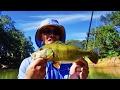 [ハワイ旅行でバス釣り]好釣!ワームで狙う楽園のピーコックバス釣り[ウィルソン湖スーさん編]