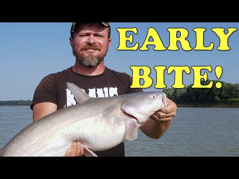 Chasing Ohio River Catfish With Tennessee Musky Guide Cory Allen