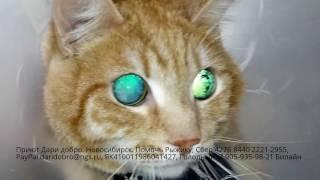 Уретростомия слепому коту Рыжику | Ветеринария | Долг за лечение | Нужна помощь