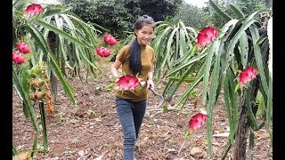 Pretty girl eat dragon fruit  eating delicious